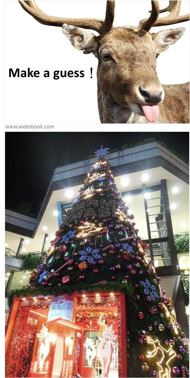 2013-1213聖誕樹下篇31